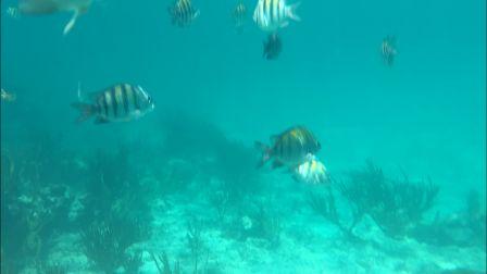 snorkeling-fish1