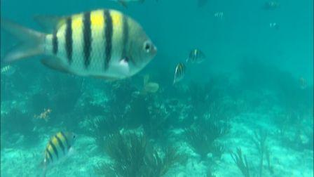 snorkeling-fish2