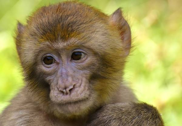 There have been many impacts on animals from COVID vaccine research, including on mink, shark, and monkey populations around the globe.